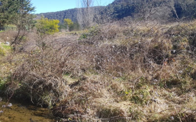 Noxious weed management